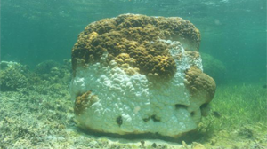 The death of corals in the South China Sea